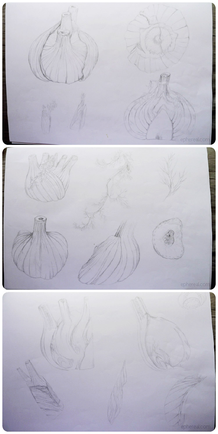 Fennel - Sketches
